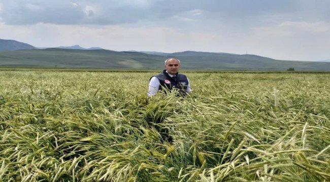 Sertifikalı tohumda 1 yılda yüzde 40'lık artış