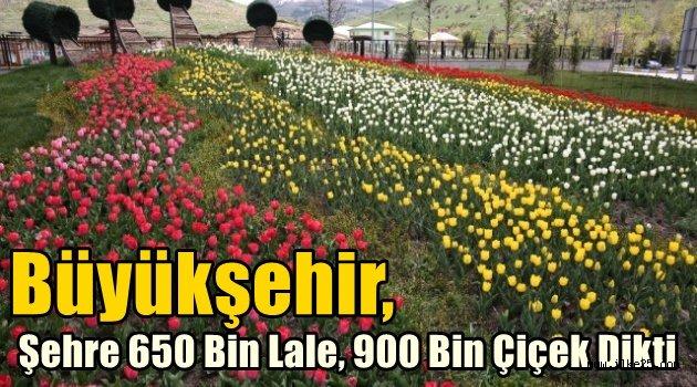 Büyükşehir, Şehre 650 Bin Lale, 900 Bin Çiçek Dikti