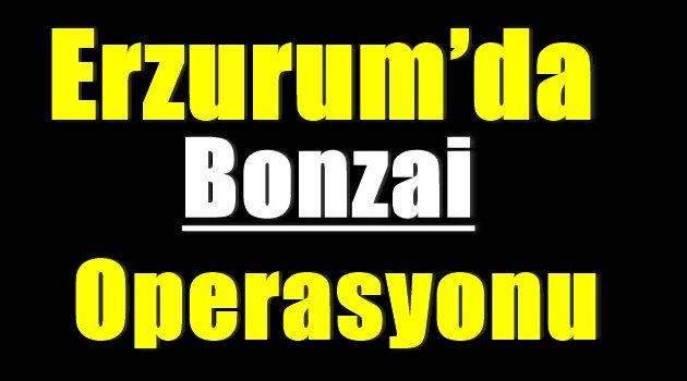 Erzurum'da bonzai operasyonu