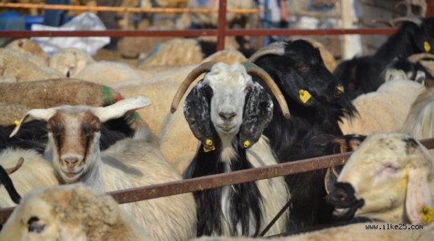 Erzurum'da Hayvan Pazarında Bayram Öncesi Yoğunluk