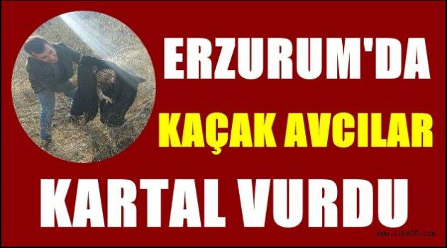 Erzurum'da Kaçak avcılar kartal vurdu