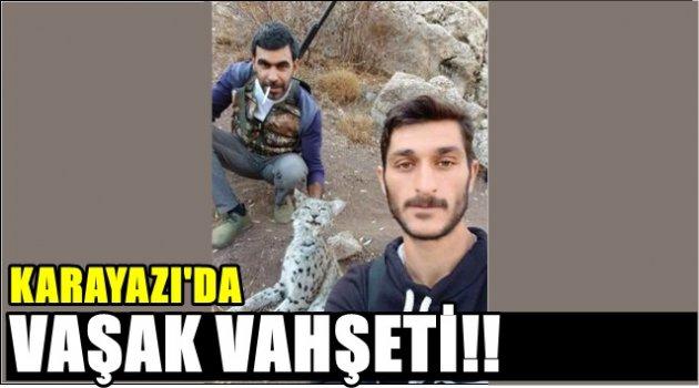 Karayazı'da Vaşak Vahşeti!!