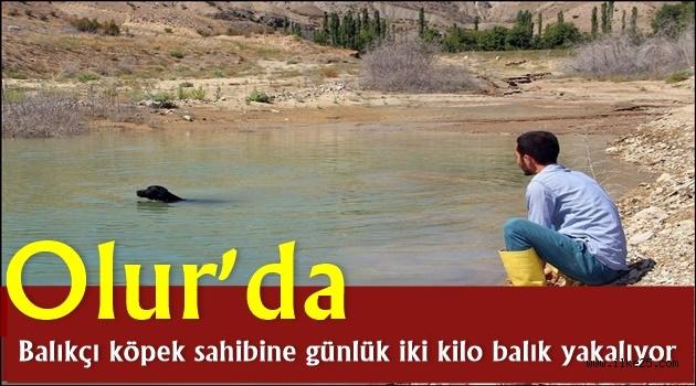 Olur'da Balıkçı köpek sahibine günlük iki kilo balık yakalıyor