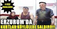 Erzurum'da Kurtlar Köylülere Saldırdı!