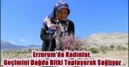 Erzurum'da Kadınlar, Geçimini Dağda Bitki Toplayarak Sağlıyor