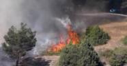 Oltu'da Orman Yangını...